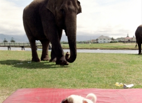 Elephant and Dog Circus