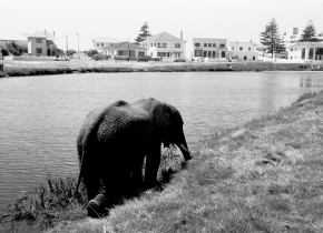 Elephant on Vlei